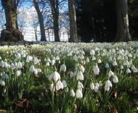 Gdy istnieją przebiśniegi? Wczesną wiosną!