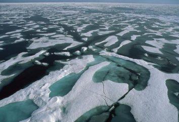 Der kälteste Ozean auf dem Planeten: das Klima und die organische Welt