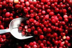 Suco de cranberry: benefícios e danos ao corpo humano, a composição e receitas