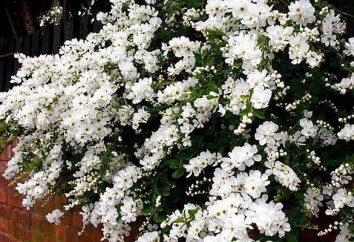 arbusti da giardino – supporto alla progettazione
