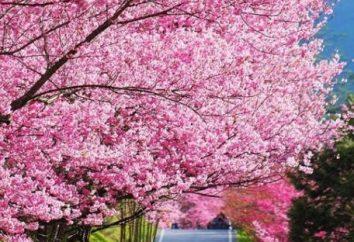 Wiosenne ogrody przetwarzania siarczanu żelaza. Spring Garden leczenie mocznika
