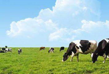 antibióticos eficaces para la mastitis en vacas