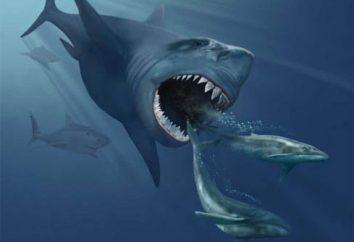 Erstaunlich Bewohner der Tiefsee. Die Monster der Tiefsee (Foto)