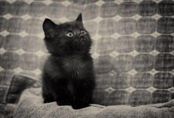 Dlaczego marzą o czarnym kociakiem? Uczymy!