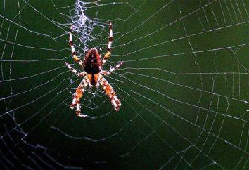 Interprétation des rêves: rêve à ce que les araignées et les toiles d'araignée