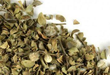 Le foglie di mirtilli: proprietà utili e recensioni controindicazioni