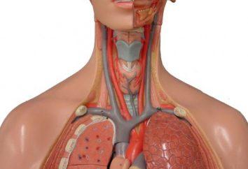 artère sous-clavière. syndrome de l'artère sous-clavière