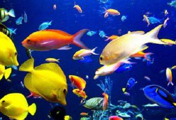 Tabela kompatybilności ryb akwariowych. Obliczanie zgodności ryb