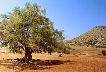 L'huile d'argan: avis. L'huile d'argan pour le visage, les cheveux