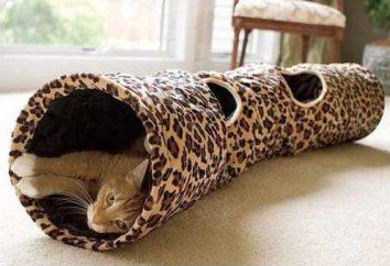 Tunel dla kotów – potrzeba czy gra?