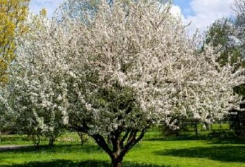 merveilleux séjour lorsque les pommiers fleurissent