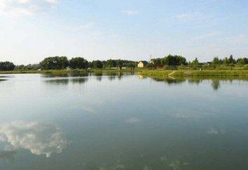 Ponty jeziora – to idealne miejsce do rekreacji i wędkowania