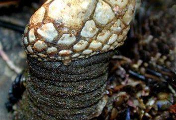 Skorupiaki. Cykl życiowy, reprodukcji