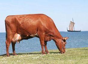 race de steppe rouge de vaches: caractéristiques, des photos, en particulier de l'élevage