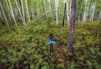 State Nature Reserve Zeya, Amur Região