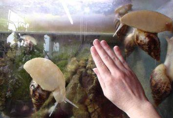 Comment choisir un terrarium pour les escargots: conseils