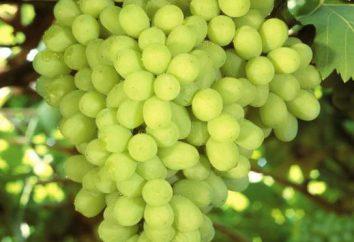 Uve Valek: descrizione della varietà