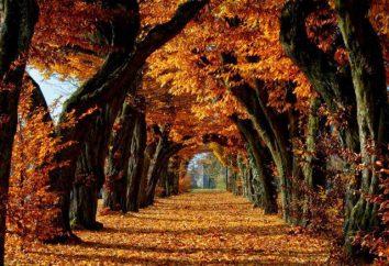 automne Nature: une série de métamorphose étonnante