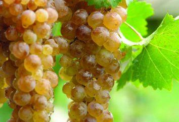 Najlepiej biały gruzińskiego wina: nazwa i opinie. Gruzińskie odmiany białe półsłodkie