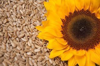 Wie die Samen in der Mikrowelle braten – schnell und lecker