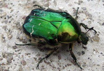 Fartuch – błyszczące zielone chrząszczy