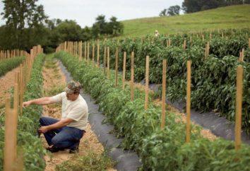 Plan Agronomie pour la culture des légumes: caractéristiques, technologie et commentaires