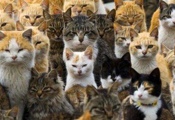 île Cat au Japon – miauler paradis avec leurs problèmes