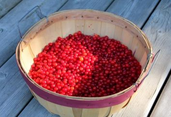Comment récolter le jus de Viburnum en hiver, et que cela peut être fait?