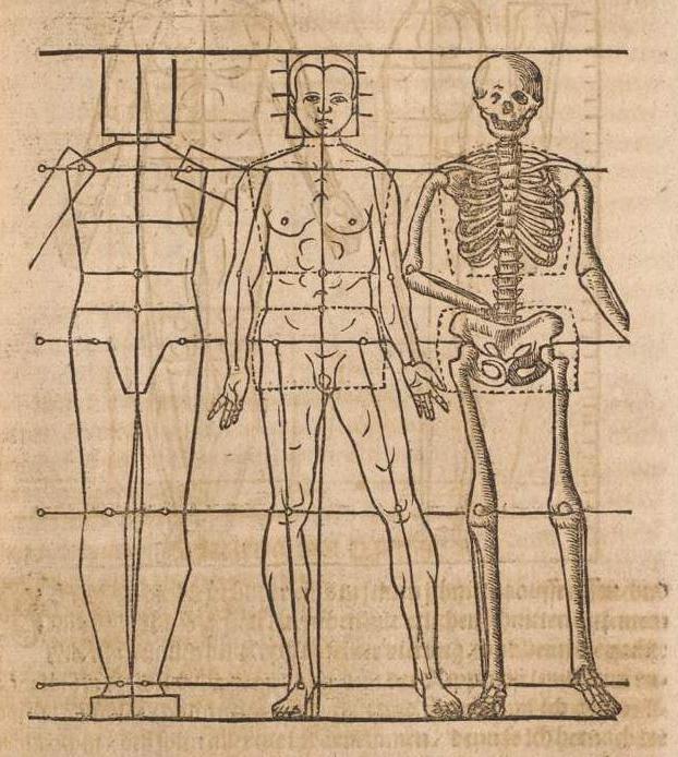 nomenclatura anatómica internacional: descripción, los términos ...