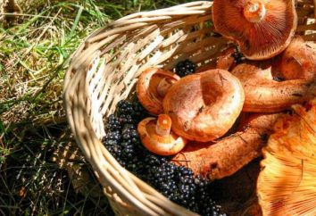 Salatura funghi secca del latte: ricette per l'inverno
