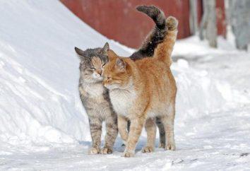 Dojrzewanie u kotów – wiek. Zapach kota w mieszkaniu. Powinienem wykastrować kota?