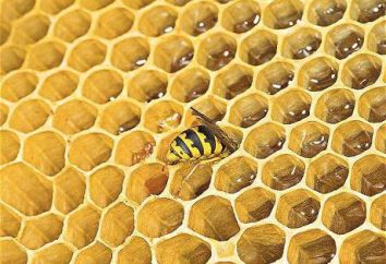 Existent-ils le miel de guêpe?