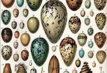 La structure des œufs d'oiseaux: le régime, en particulier