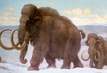 Jak wygląda ząb mamuta?