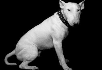 Le chien le plus dangereux dans le monde
