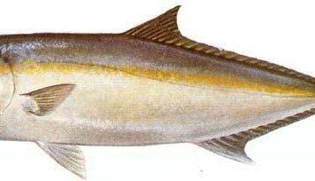Jakie są ryby dobre dla zdrowia ludzkiego? Smażone ryby – korzyści i szkody