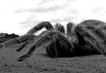 Les araignées géantes – la fiction ou la vérité de la vie?