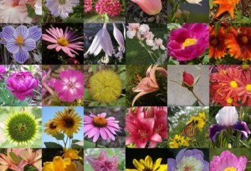 Name der Blumen für Blumensträuße gedeihen Zusammensetzung in der Hütte