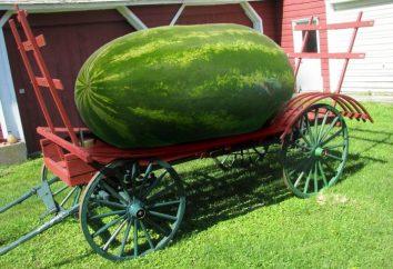 Le plus gros melon d'eau dans le monde en surprendra plus