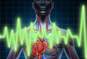 Quel est le suivi quotidien de l'ECG Holter?