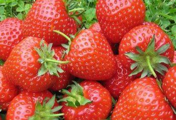 Reproduction moustache fraises et graines