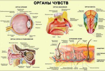 A estrutura e funções do receptor dos sistemas sensoriais. As principais funções dos receptores celulares