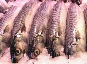Rosa salmão salmões salgados sob: a receita com uma foto