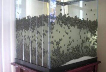 Jak pozbyć się ślimaków w akwarium: wszystkie uruchomione procesy