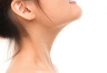 Anatomia szyi: kręgi, mięśnie, naczynia