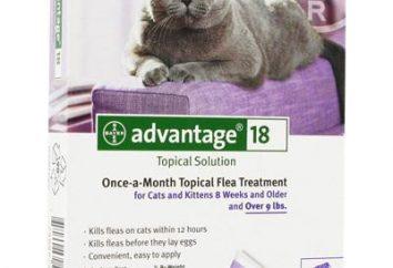 « Advanteydzh » (baisse des fane): mode d'emploi, avis. Des gouttes de puces pour les chats