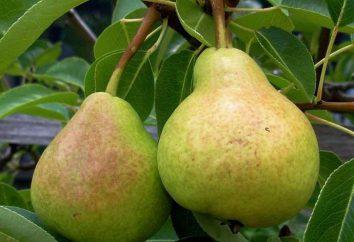 """Pera """"preferito Yakovlev"""": descrizione della varietà, in particolare la coltivazione, la cura e recensioni"""