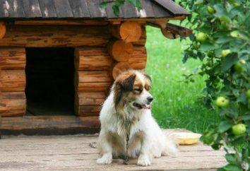 Jak zrobić budę dla psa z jego własnymi rękami: Highlights