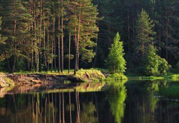 Meshchersky lasy: opis, charakter, cechy i opinii. Meshchersky krawędź: lokalizacja, charakter i przyrody