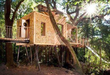 13 maisons originales sur les arbres, qui seront au goût même pour les adultes